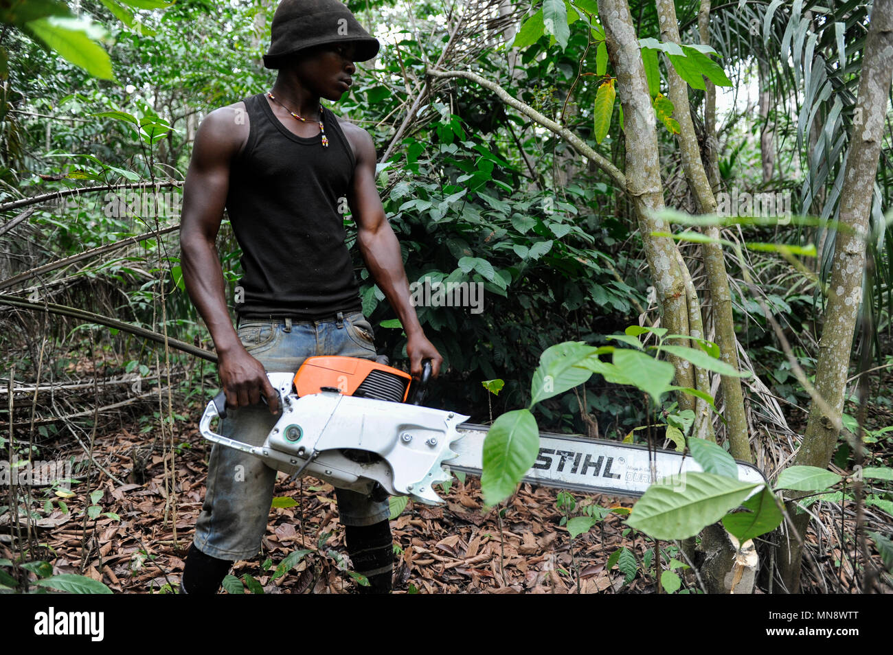 ANGOLA Calulo, old german coffee plantation, deforstation, worker with german made Stihl chain saw between coffee shrubs - Stock Image