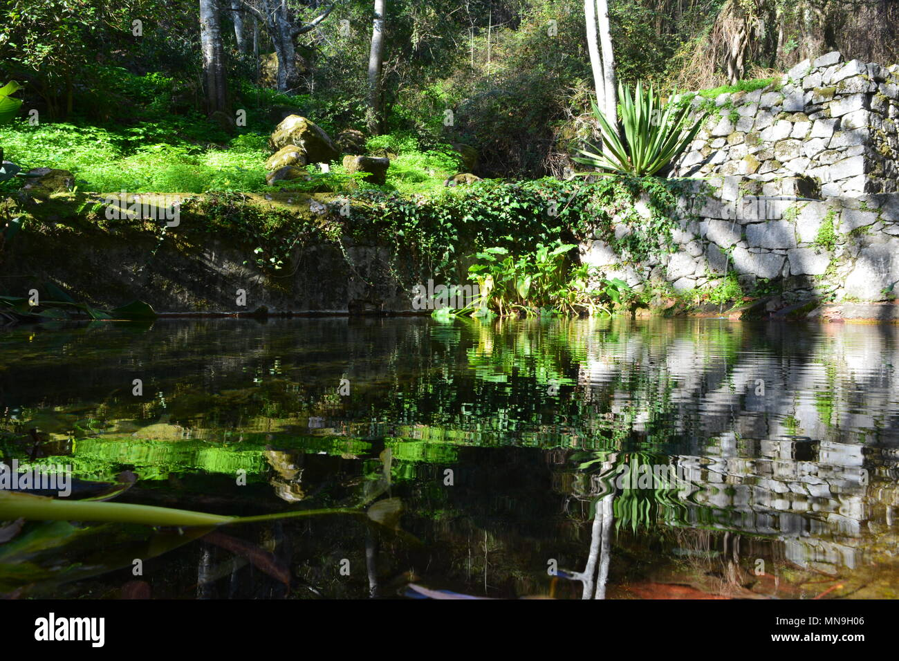 Luscious, green vegetation and ripples on a natural spring pool in Caldas de Monchique in the Algarve, southern Portugal Stock Photo