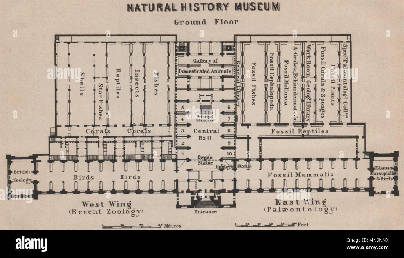Natural History Museum Ground Floor Plan South Kensington London 1905 Map Stock Photo Alamy