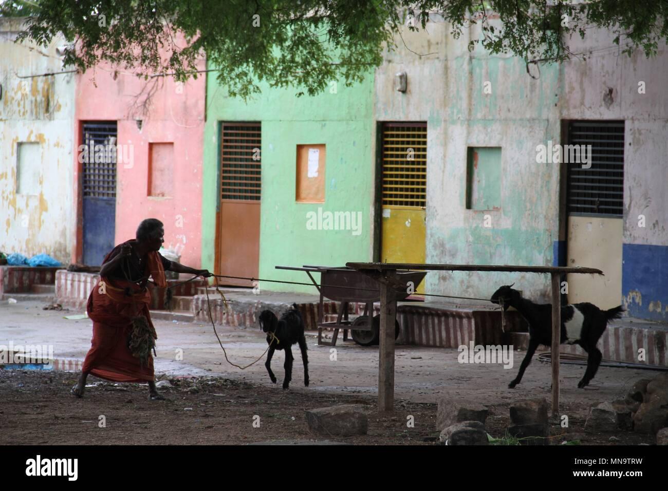 Indian Grandma Stock Photos & Indian Grandma Stock Images - Alamy