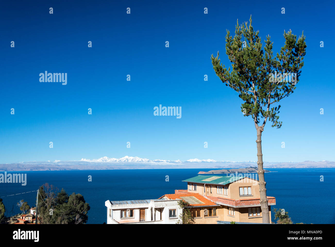 Tall tree with Lake Titicaca and the Andes Mountains in the background on Isla del Sol in Bolivia - Stock Image