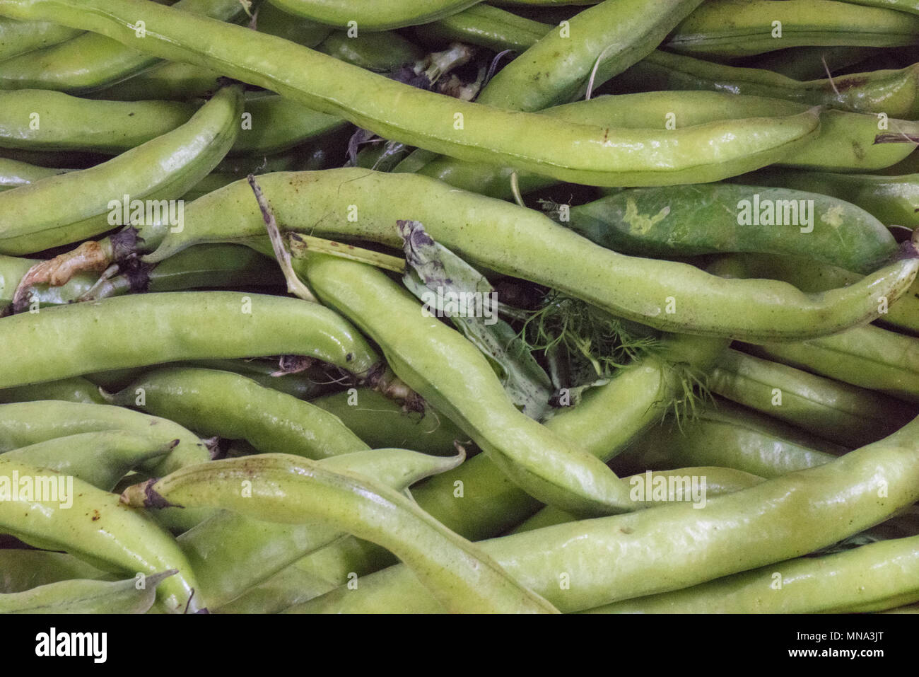 Broad beans for sale on market stall at borough market in central london. Legumes in pods freshly picked and healthy foods part of 5 a day five a day. - Stock Image