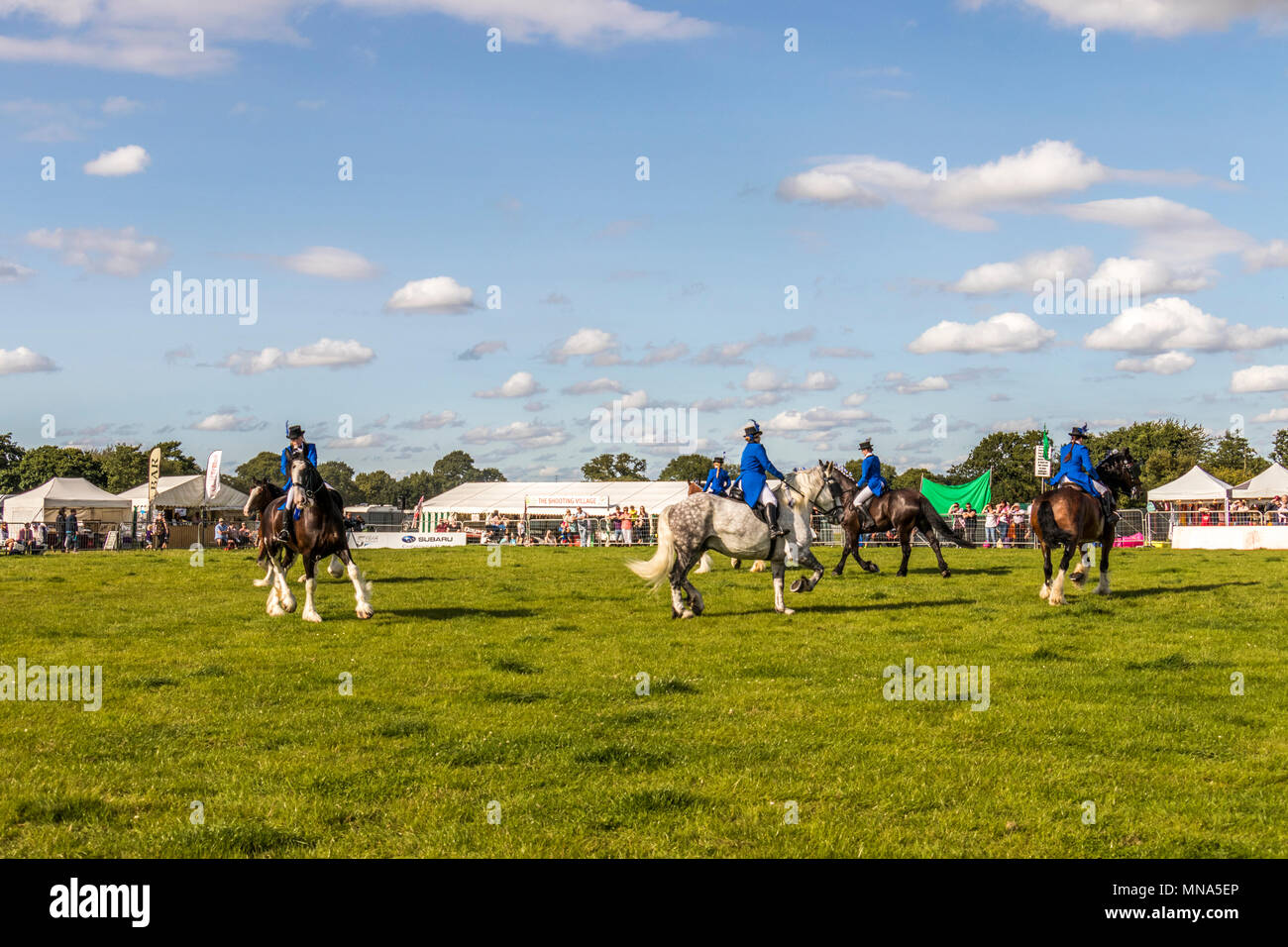 N and J musical Shire horses giving a display at Cheshire Game and Country fair at Tabley showground Cheshire UK. - Stock Image