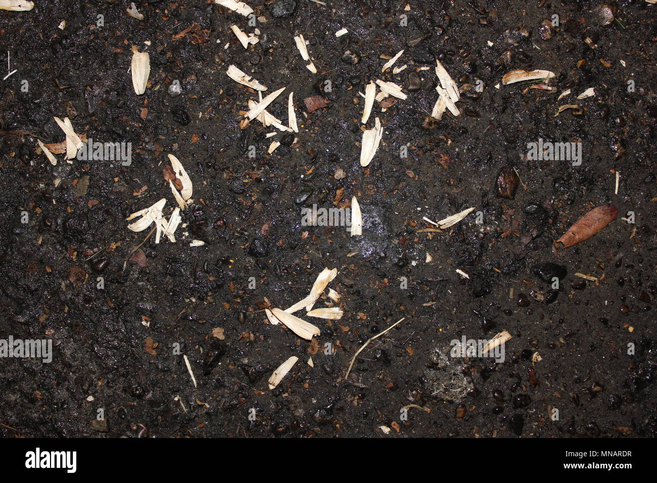Smashed sunflower seeds shells scattered in a parking lot. - Stock Image
