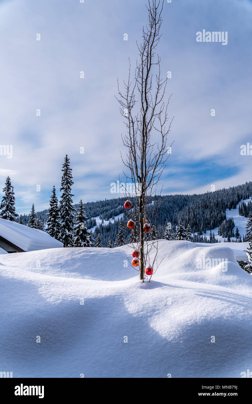 beautiful christmas decorations in the snow outside a home in the ski resort village of sun peaks in british columbia canada - Ski Christmas Decorations