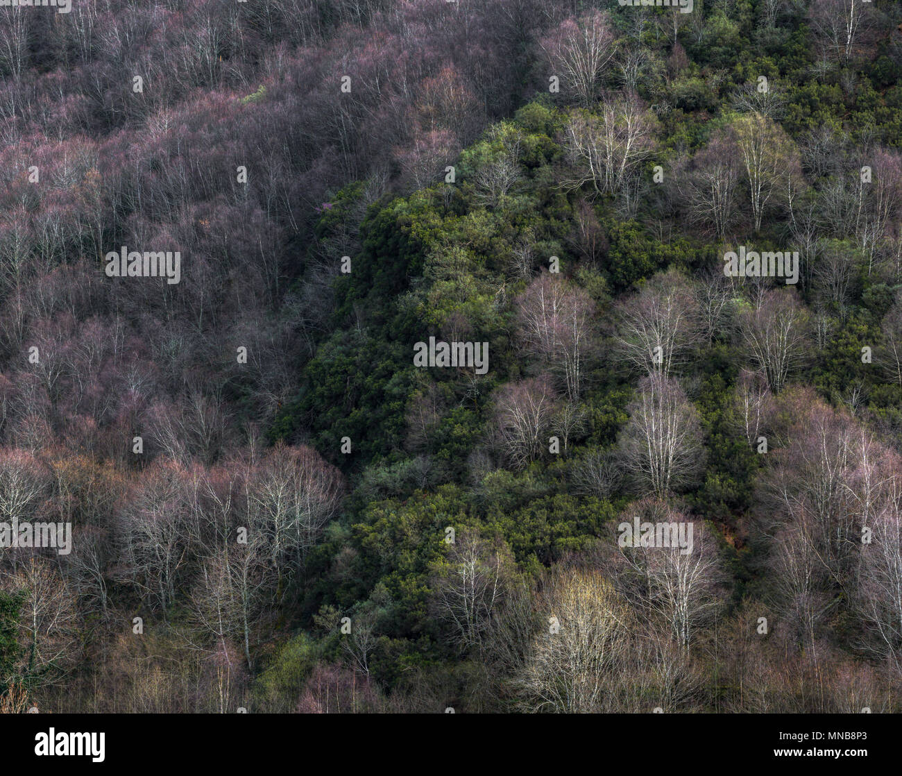 Mixed Deciduous And Perennial Forest In Samos Lugo Galicia Stock Photo 185259819 Alamy