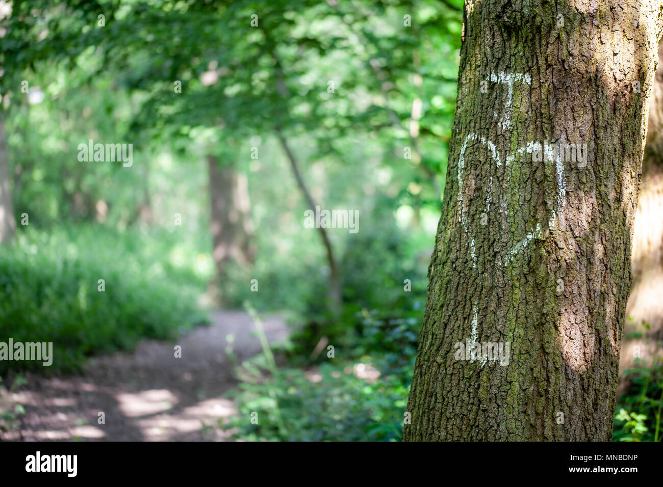 Initals of lovers written in chalk on a tree trunk - Stock Image