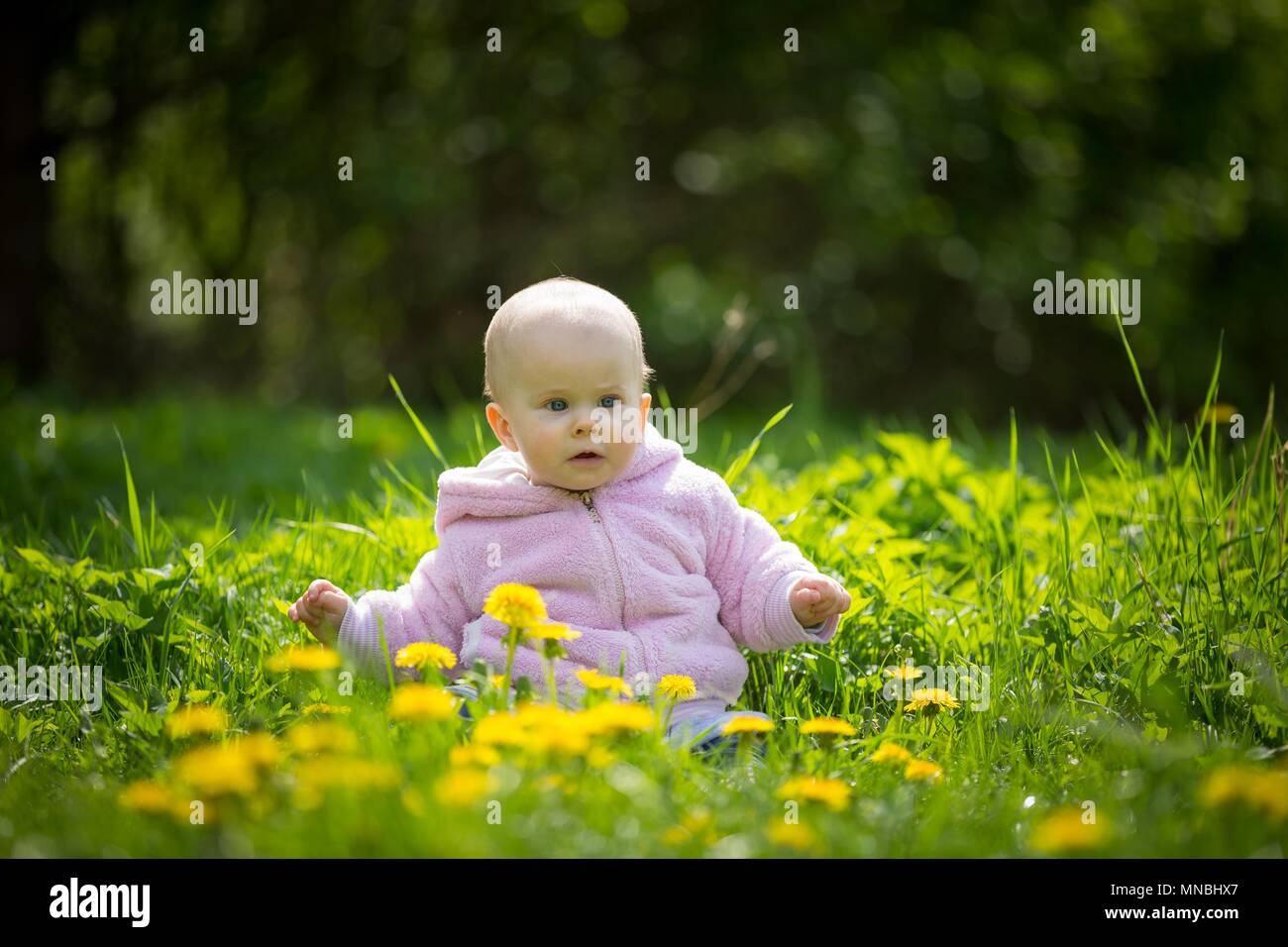 beautiful small baby girl sitting on dandelions meadow at spring
