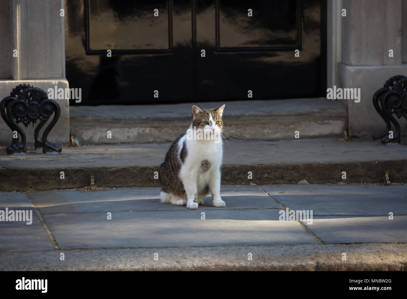 Larry the Cat outside 10 Downing Street in London©Keith Larby/Alamy Stock Photo