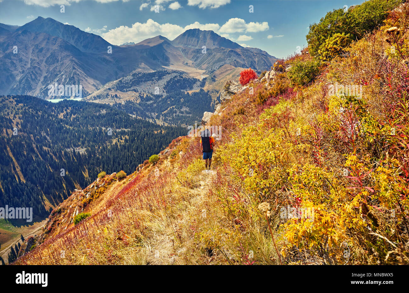 Hiker with big backpack walking on the trail at autumn yellow trees in the mountains - Stock Image