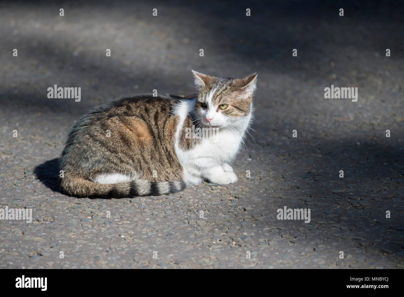 cat laser app