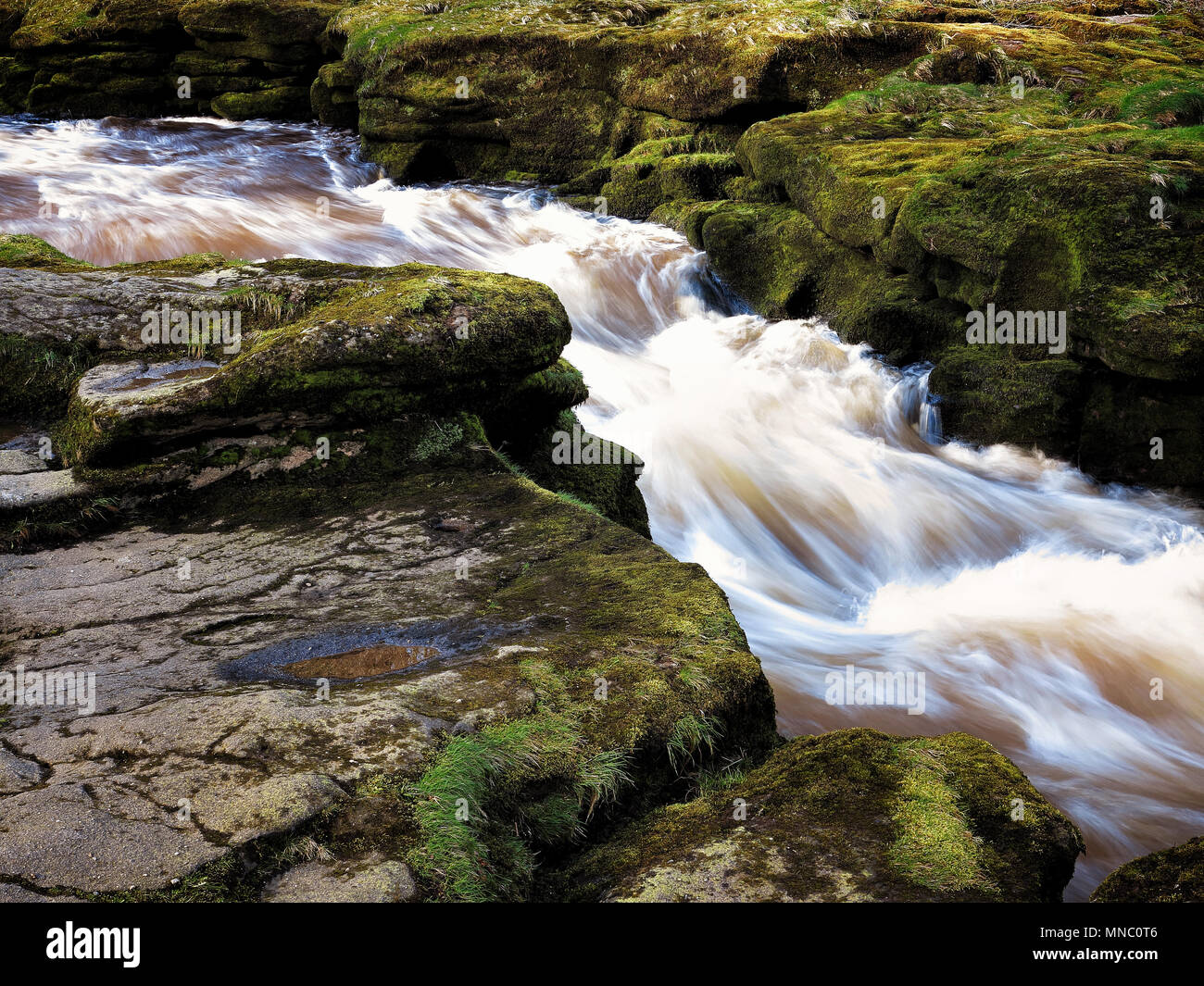 The gushing waters of The Strid, a dangerous section of the River Wharfe near Bolton Abbey - Stock Image