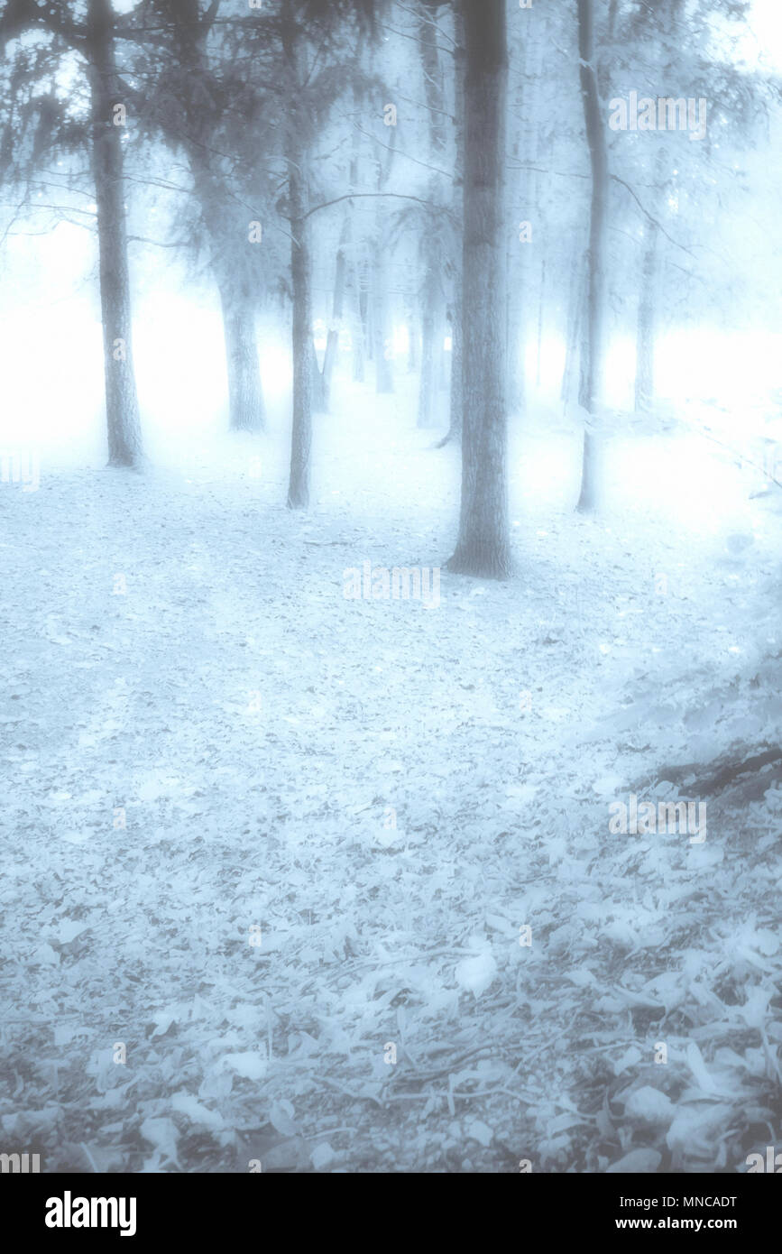 blue magic forest - Stock Image