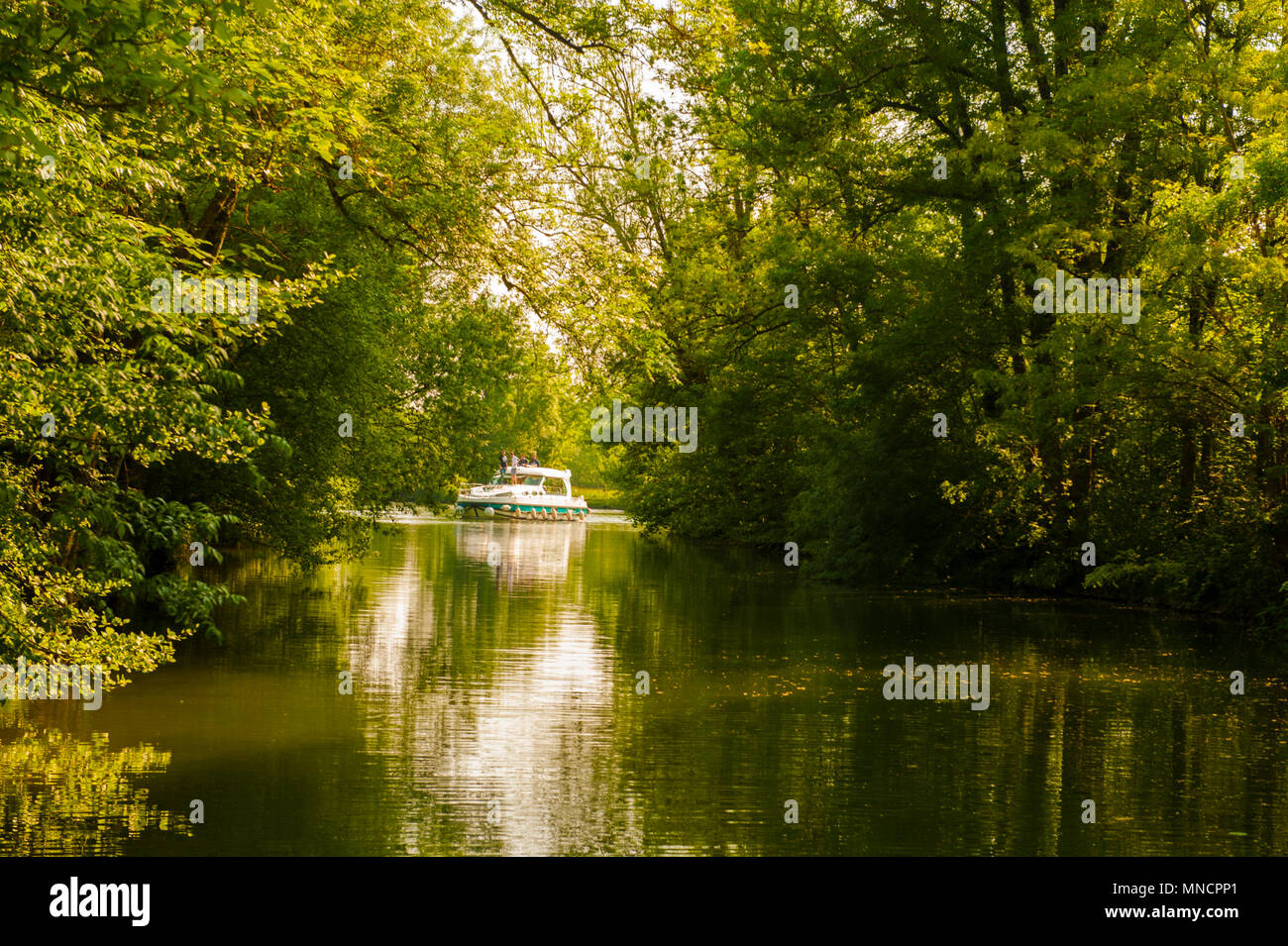 Boating on the Charente river near Vibrac is like passing through green jungles - Stock Image