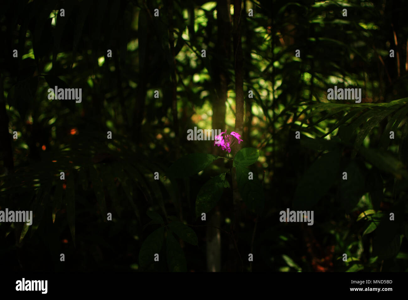 Single Pink Flower In A Dark Forest Wallpaper Background Stock Photo
