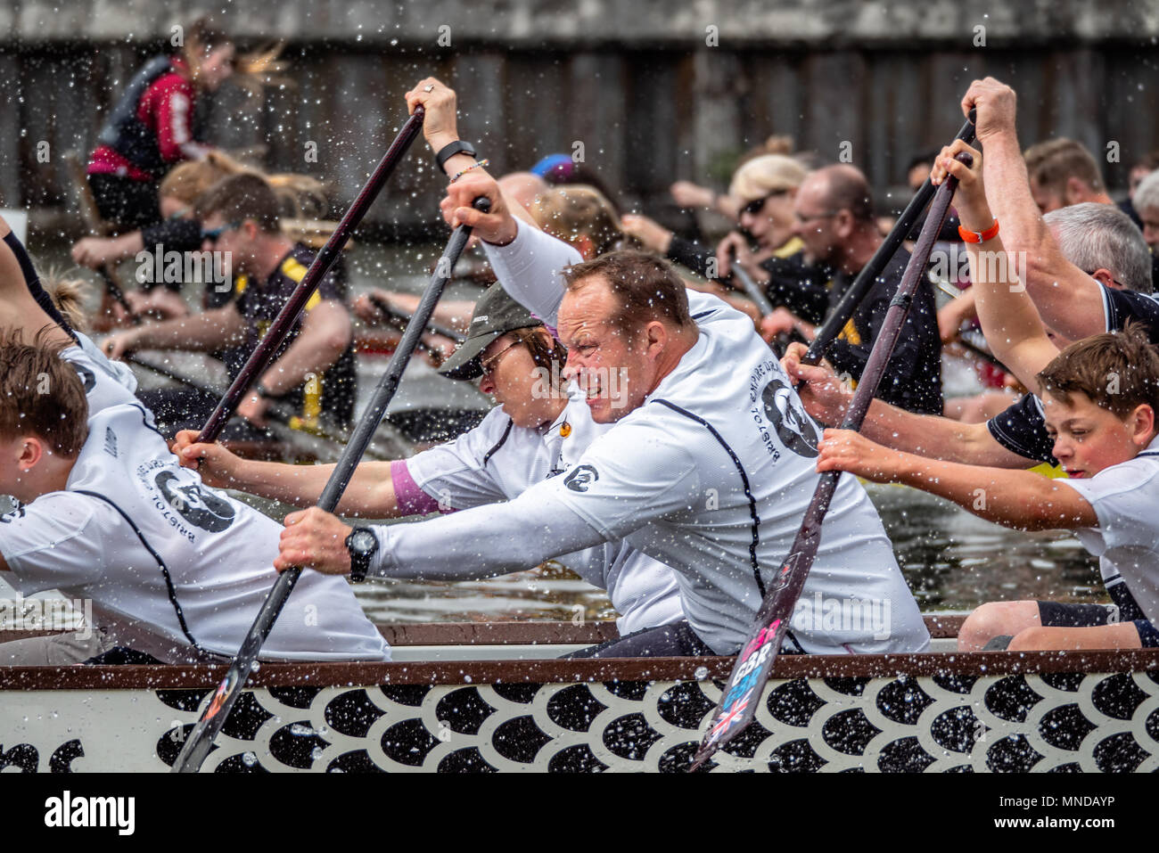 Dragon boat racing on Bristol floating harbour where teams of amateur rowers frantically paddle decorated canoes to raise money for charity Bristol UK - Stock Image