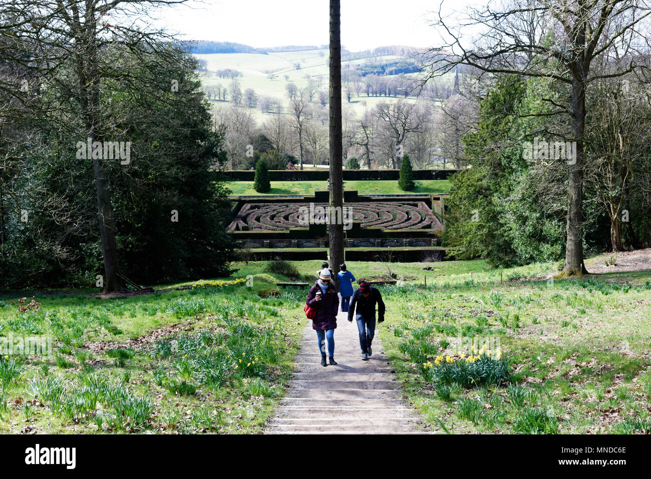 The maze at Chatsworth House near Bakewell in Derbyshire, England - Stock Image