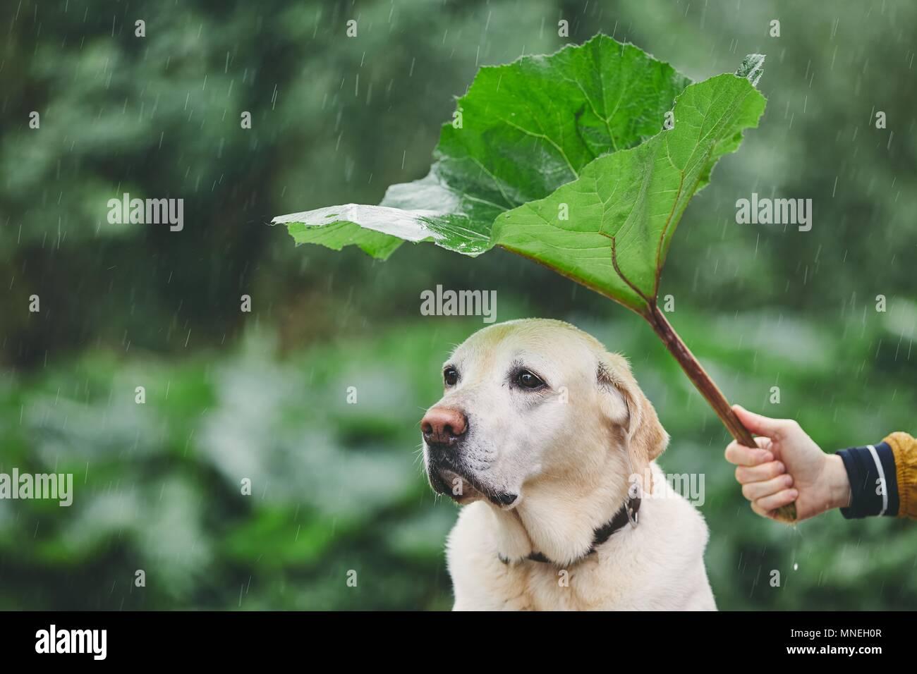 Raindrop Leaf Stock Photos & Raindrop Leaf Stock Images ...