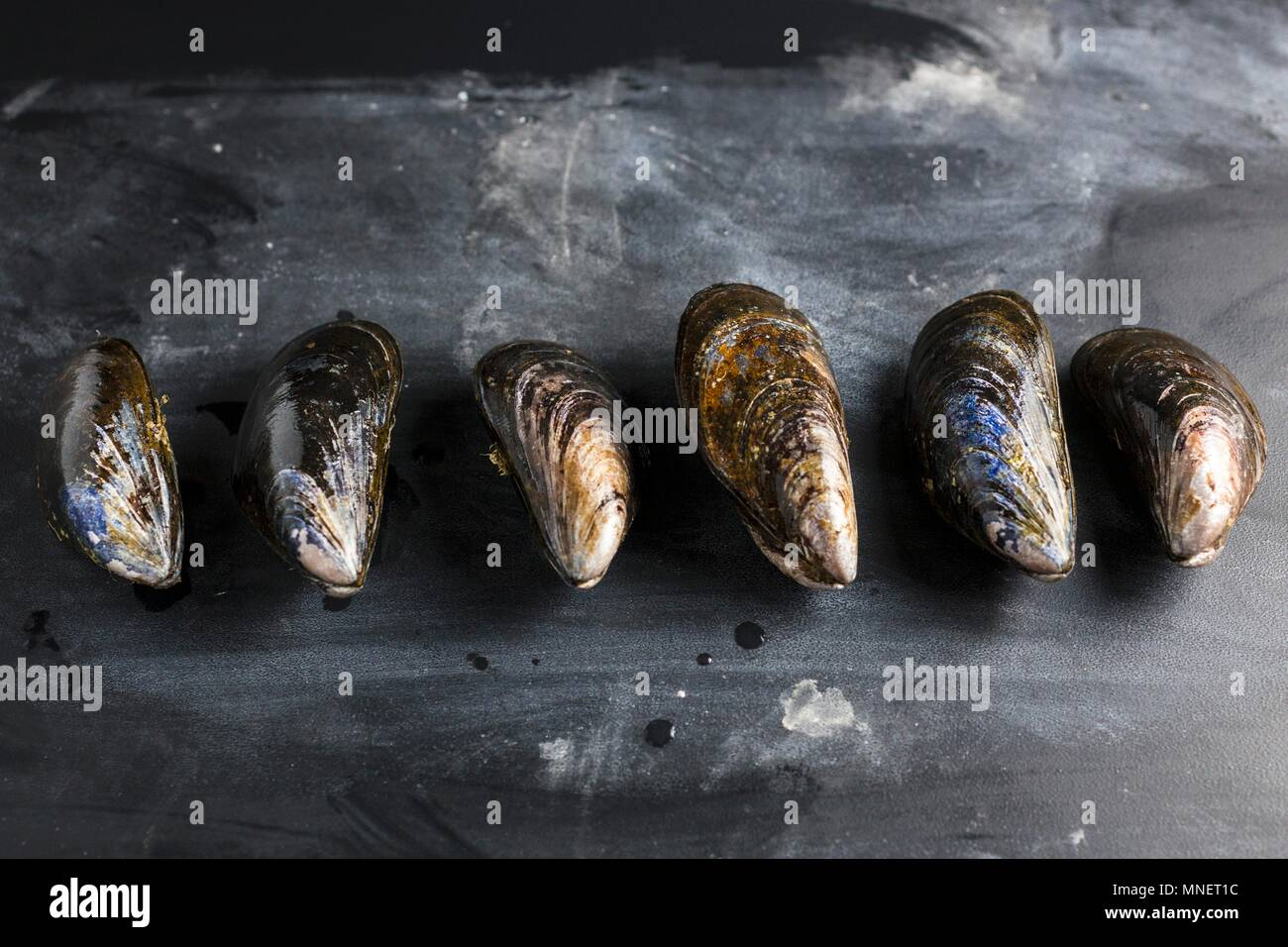 A row of mussels on a slate slab - Stock Image