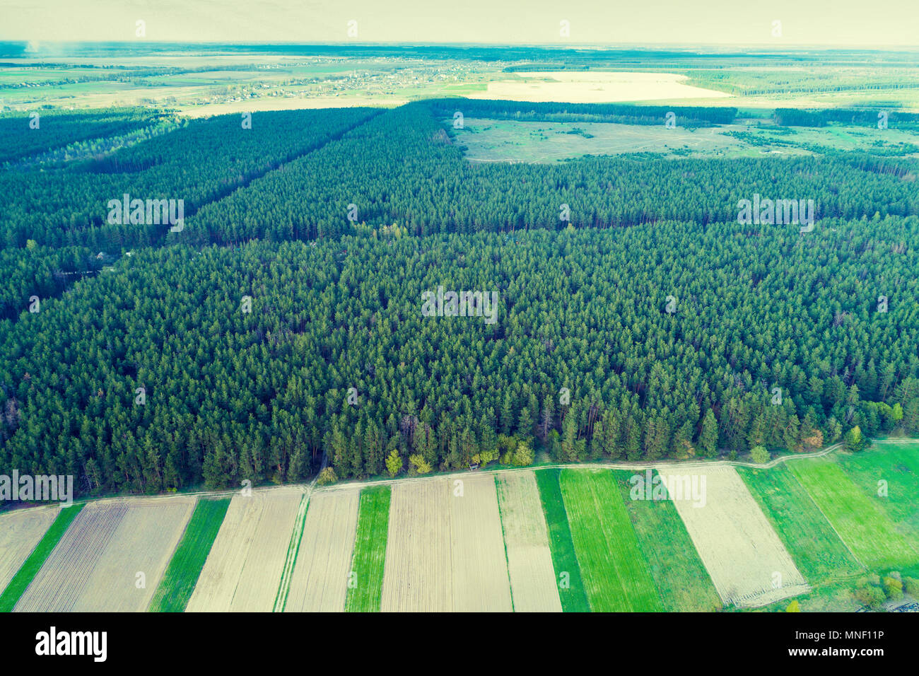 Aerial view of the pine forest and countrysides - Stock Image