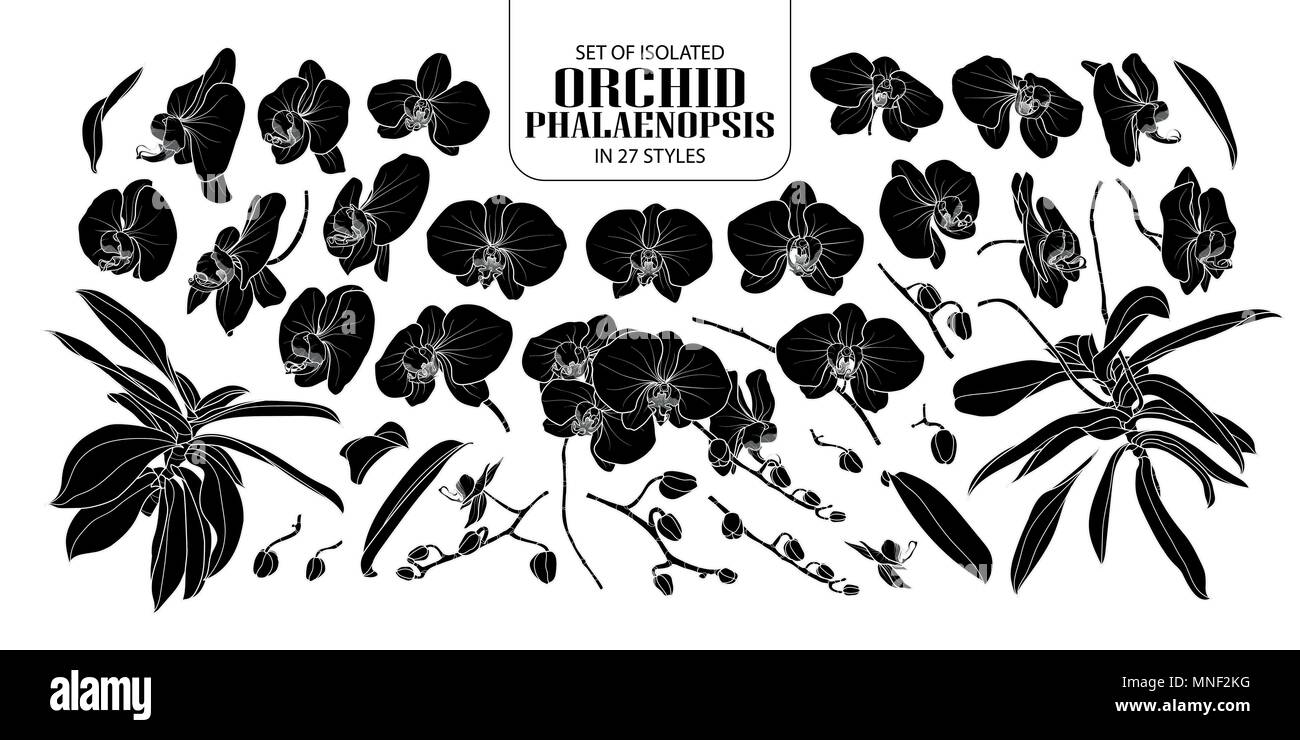 Set of isolated silhouette orchid, Phalaenopsis in 27 styles. Cute hand drawn flower vector illustration in white outline and black plane on white bac - Stock Image