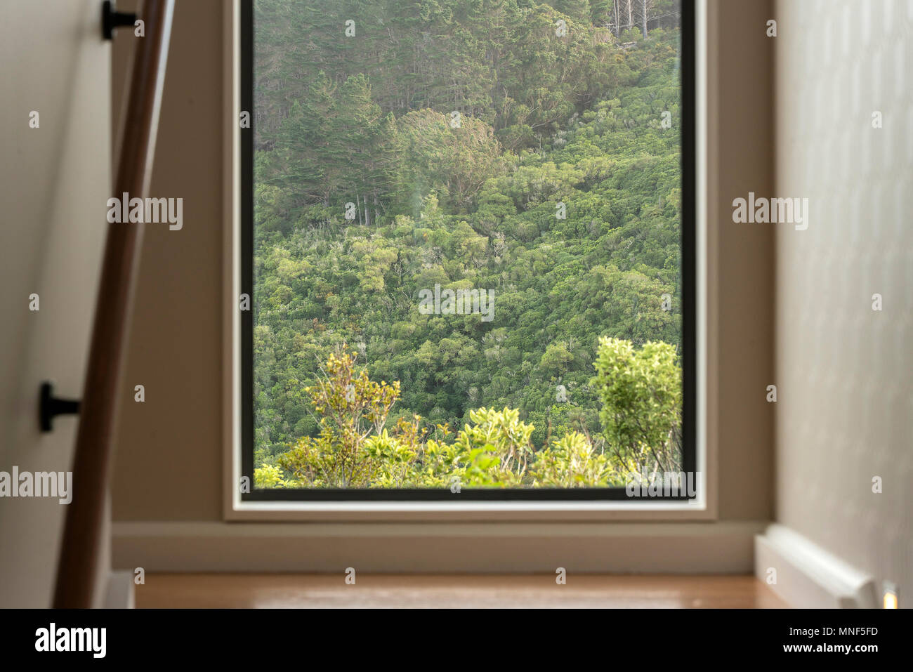 View out of window onto New Zealand native bush on the staircase ...