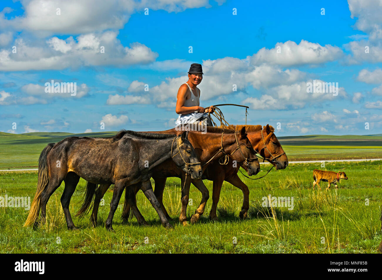 Shepherd rides with horses in the steppe, Mongolia - Stock Image
