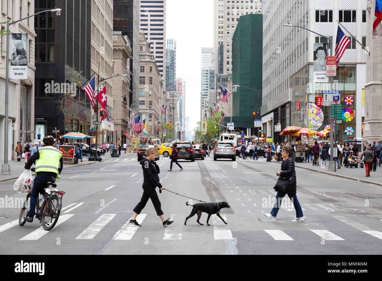 Fifth Avenue New York - pedestrians, walking the dog and cyclist crossing 5th Avenue, New york city, USA Stock Photo
