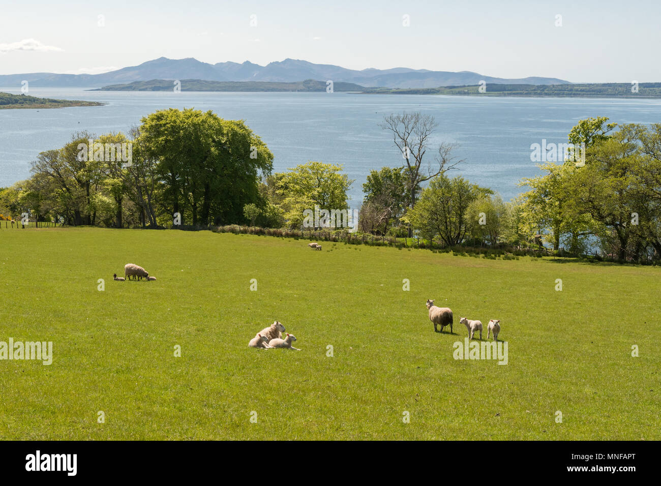 view of the Isle of Arran across the Firth of Clyde from Largs in spring, Scotland, UK - Stock Image