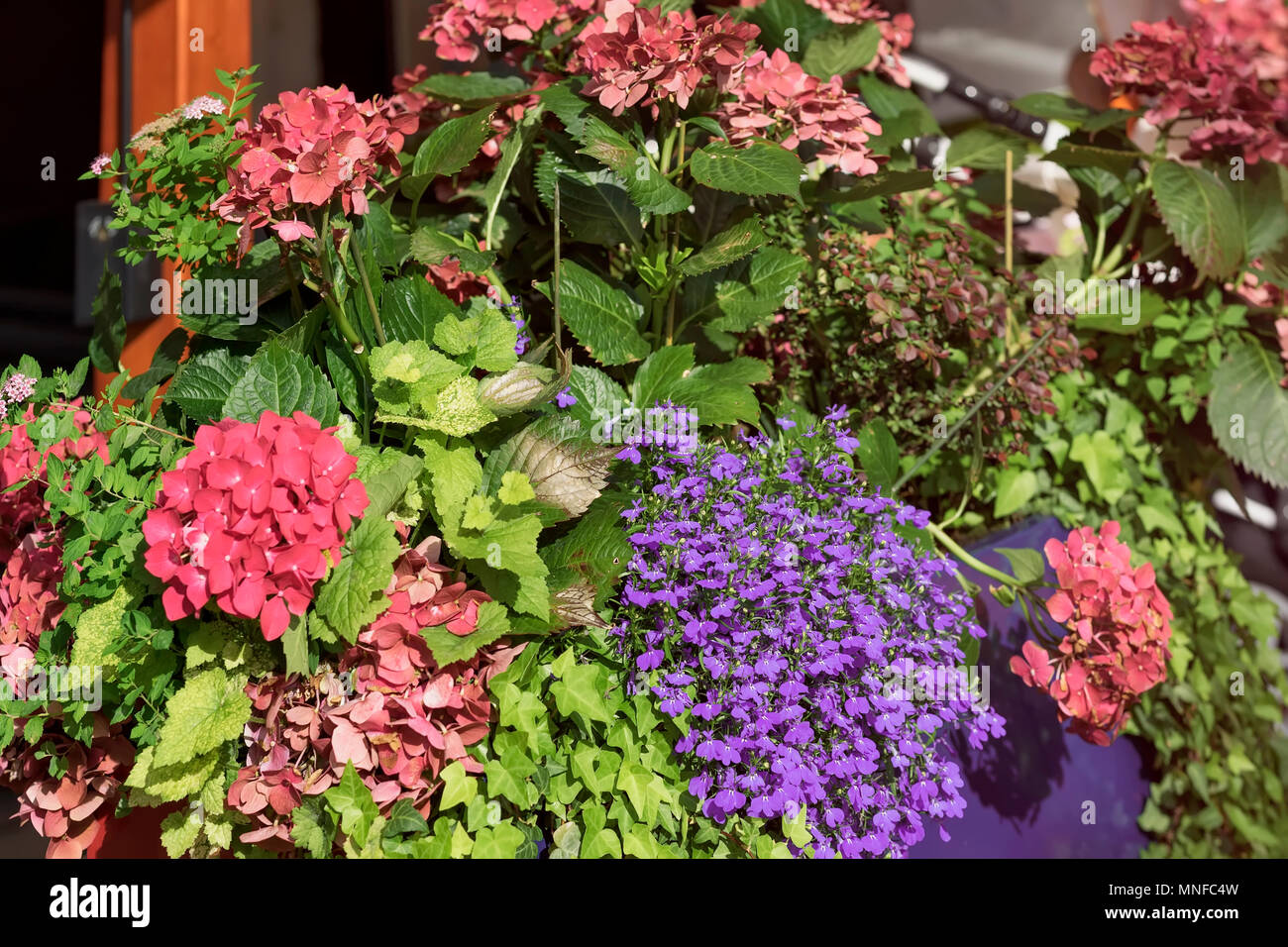 Colorful Brightly And Vivid Blooming Summer Or Spring Flowers With