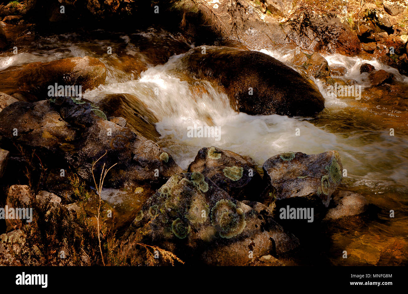 Mountain creek with water flowing swiftly between boulders. - Stock Image