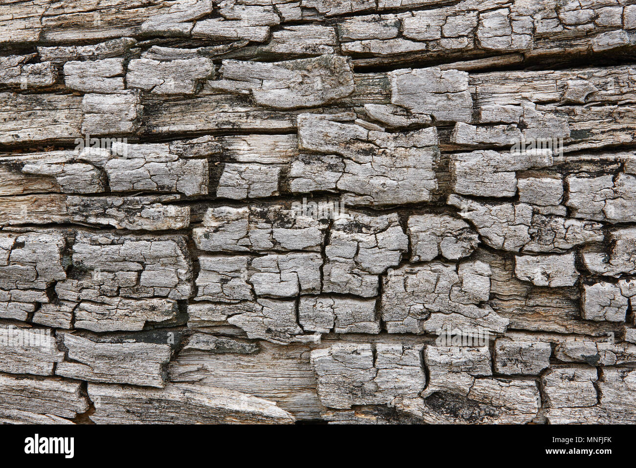 Tree bark surface. Textured wooden background. Horizontal - Stock Image