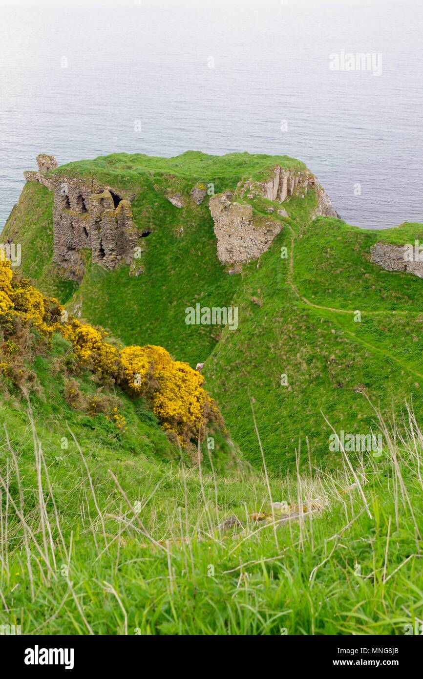 Ruin of Findlater Castle Built Precariously on a Rugged Sea Cliff. Sandend, Scotland, UK. May, 2018. - Stock Image
