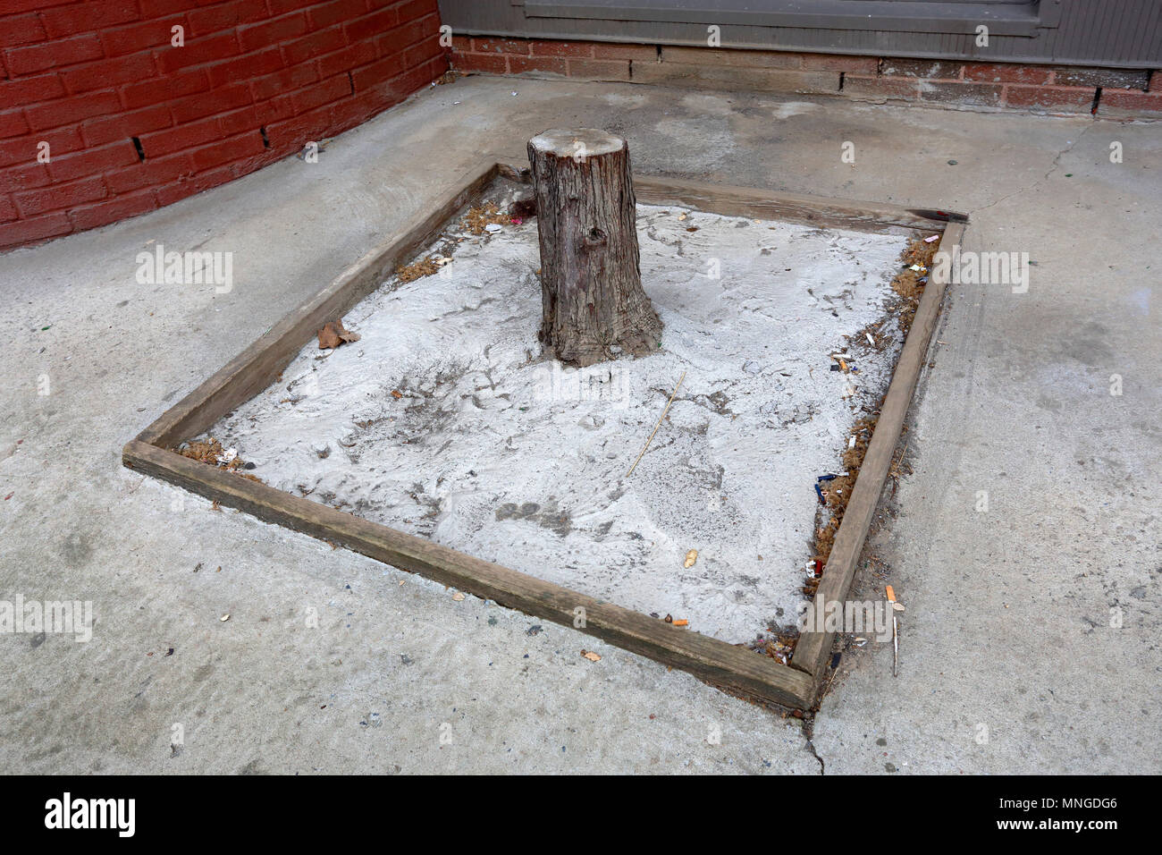 dead tree stump covered in concrete - Stock Image