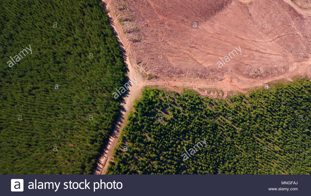 Aerial view of  forest landscape and the forestry industry. - Stock Image