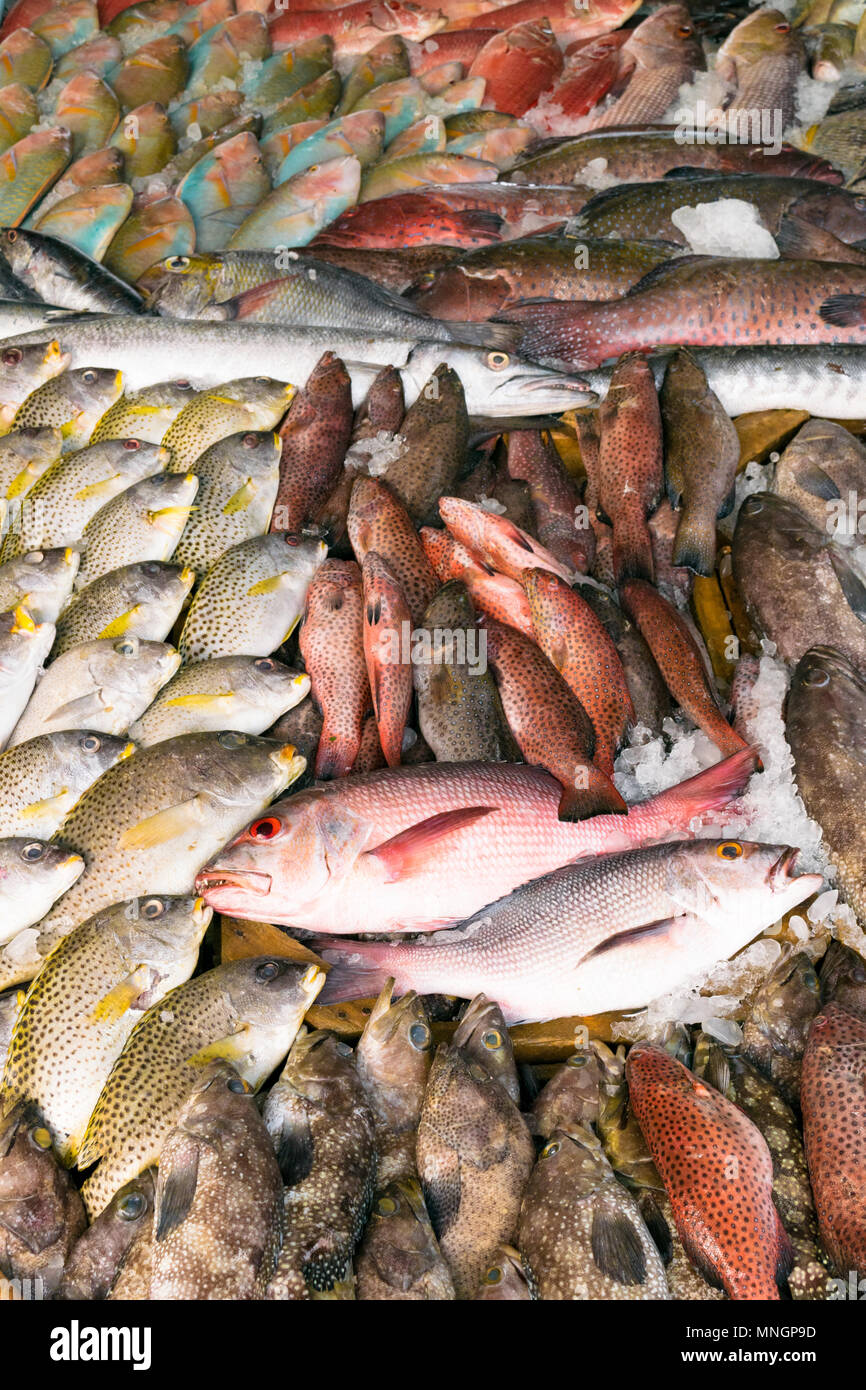 Various types of fish are displayed on the table for sale in the market. The fish is mixed with ice to preserve its freshness. Stock Photo