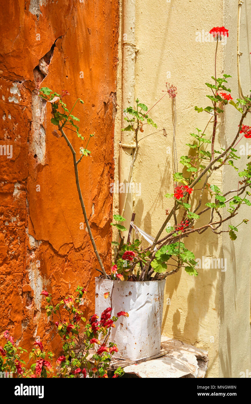 Mediterranean still life with geranium and colorful walls Stock ...