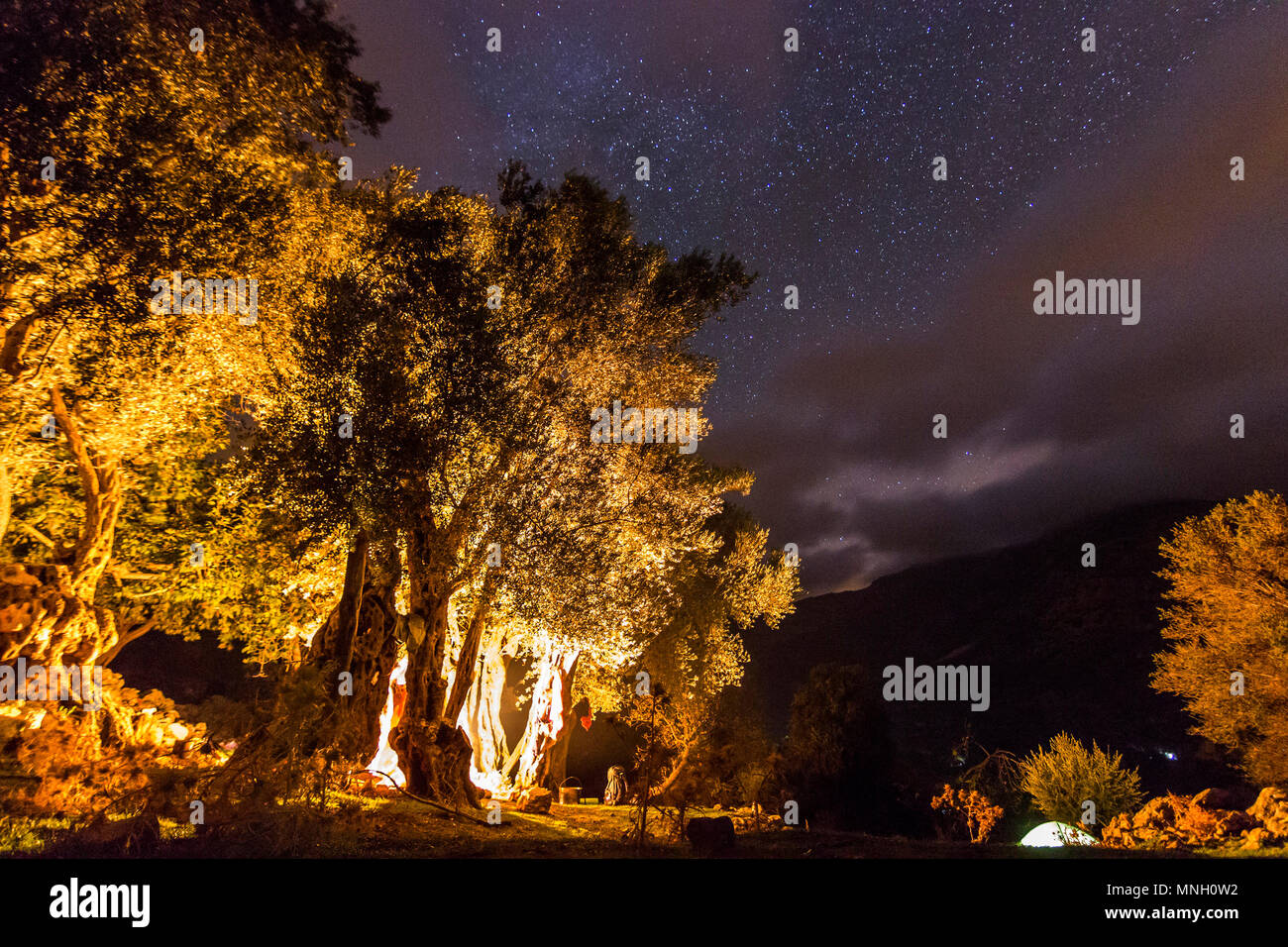 forest with bonfire at night with stars on sky - Stock Image