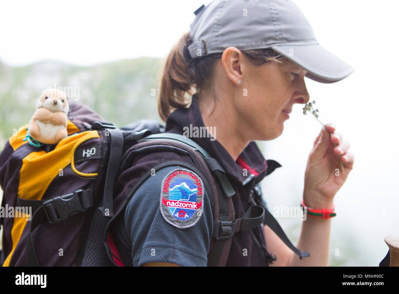 Portrait of female ranger of Triglav National Park smelling flower whilst guiding tourist around Krn mountain, Slovenia Stock Photo
