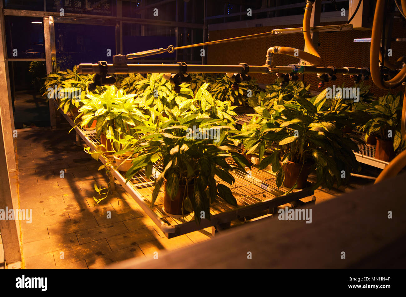 An automated plant watering system on display at the China Science