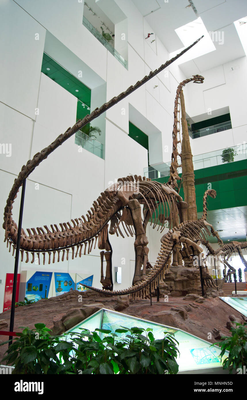 Three Sauropod dinosaurs (Diplodocus) of the Jurassic Period in a display at the China Science and Technology Museum in Beijing, China. Stock Photo