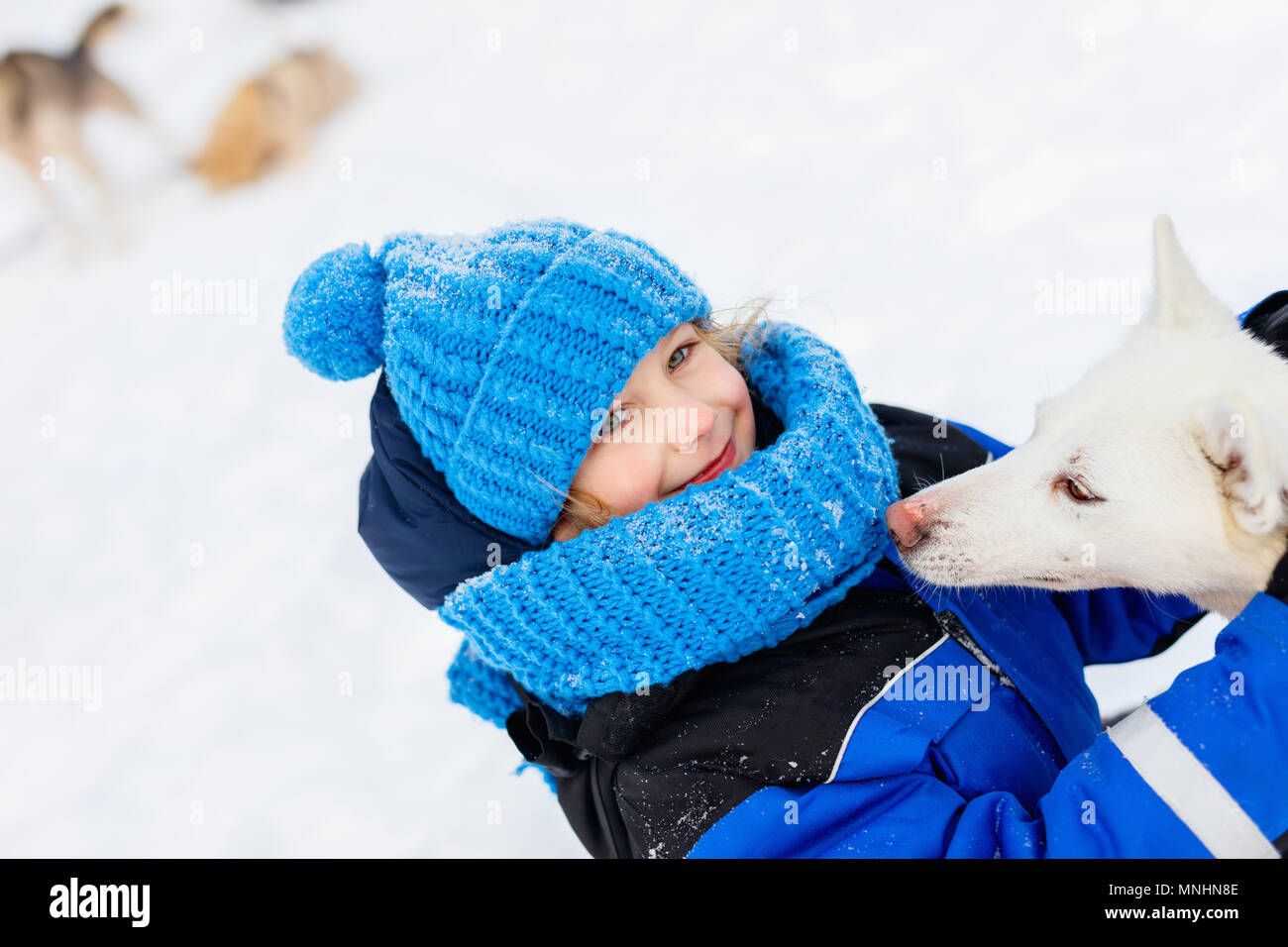 Adorable little girl having a cuddle with husky sled dog in Lapland Finland - Stock Image