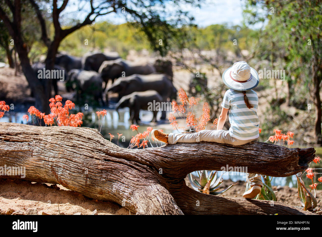 Little girl on African safari vacation enjoying wildlife viewing at watering hole - Stock Image