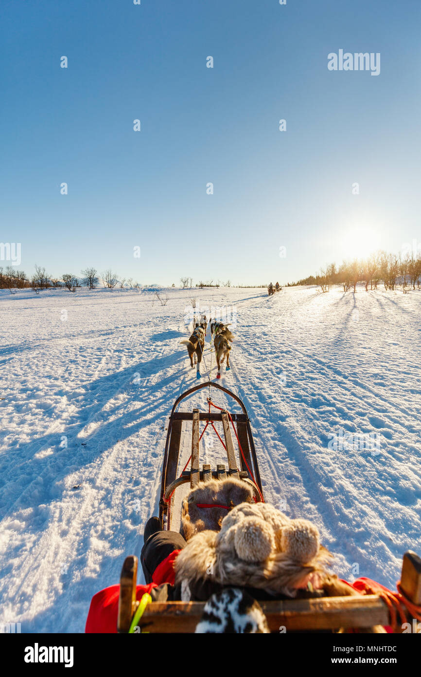 Husky dogs are pulling sledge with little girl on sunny winter day in Northern Norway - Stock Image