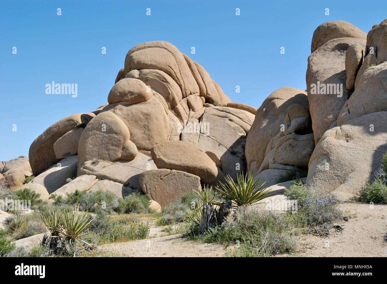 Indian Faced Rock, Monzogranite rock pile, Jumbo Rocks, Joshua Tree National Park, CA 040410_0704 - Stock Image