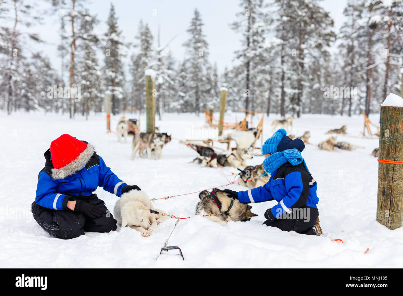 Adorable little girl and cute boy outdoors on beautiful winter day having fun playing in snow with husky - Stock Image