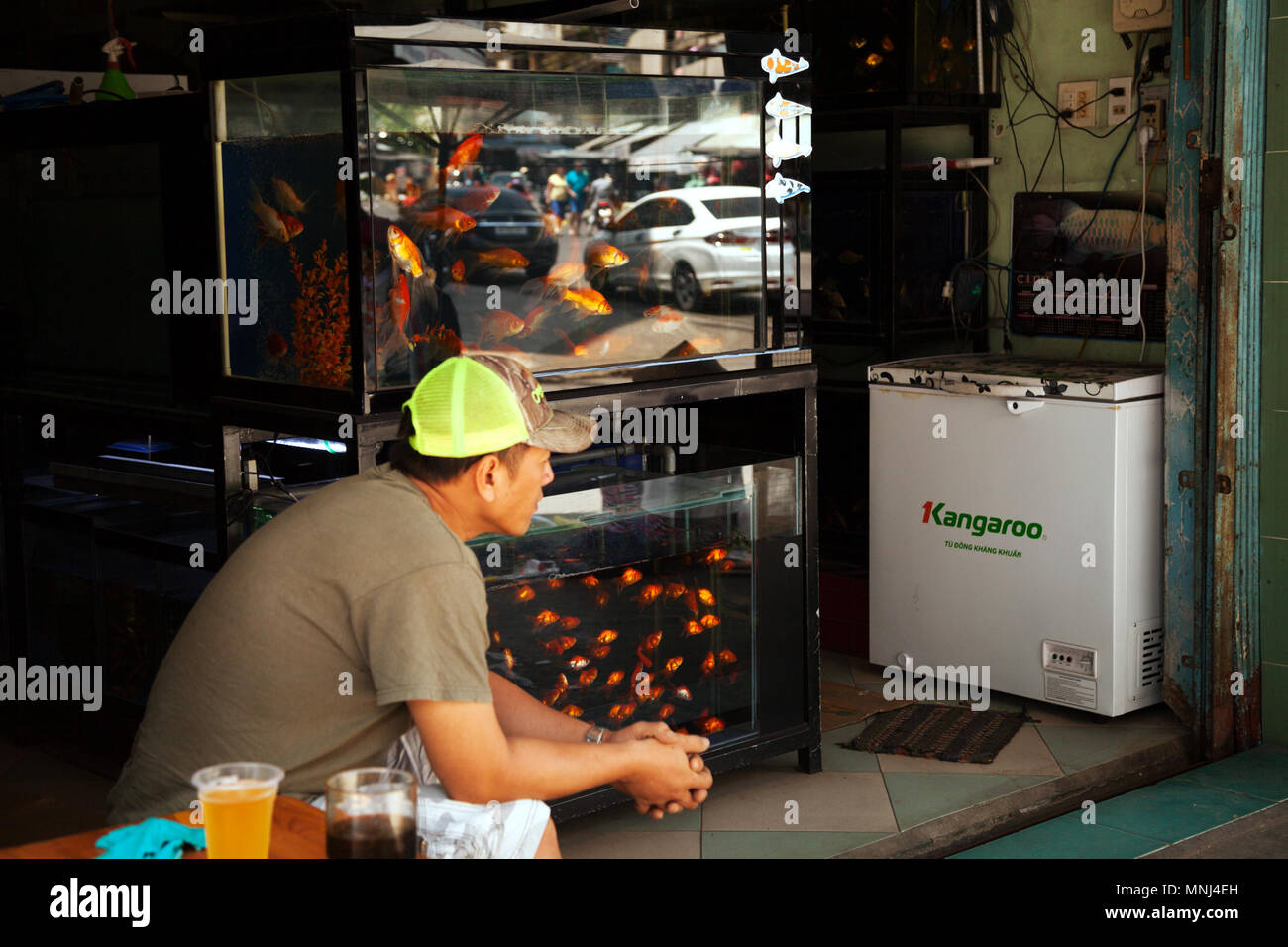 Goldfish seller waiting for customers and drinking beer. Vietnamese pet shop vendor. Many gold fishes in aquariums at a street store - Stock Image