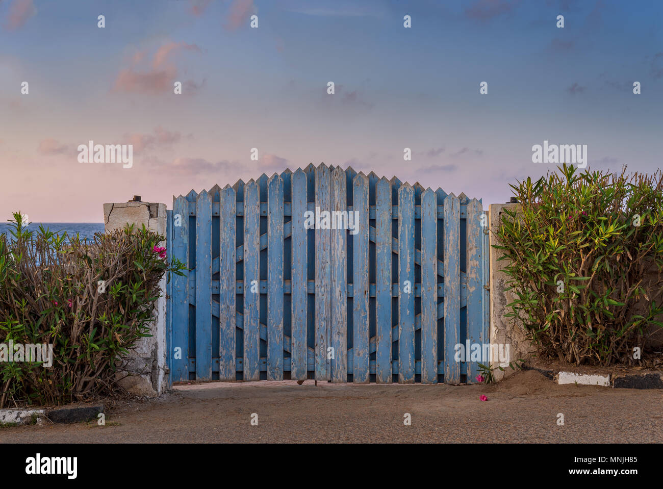 Curved weathered blue wooden garden gate with green bushes at both sides and partly cloudy sky at sunrise time at Montaza public park, Alexandria, Egy - Stock Image