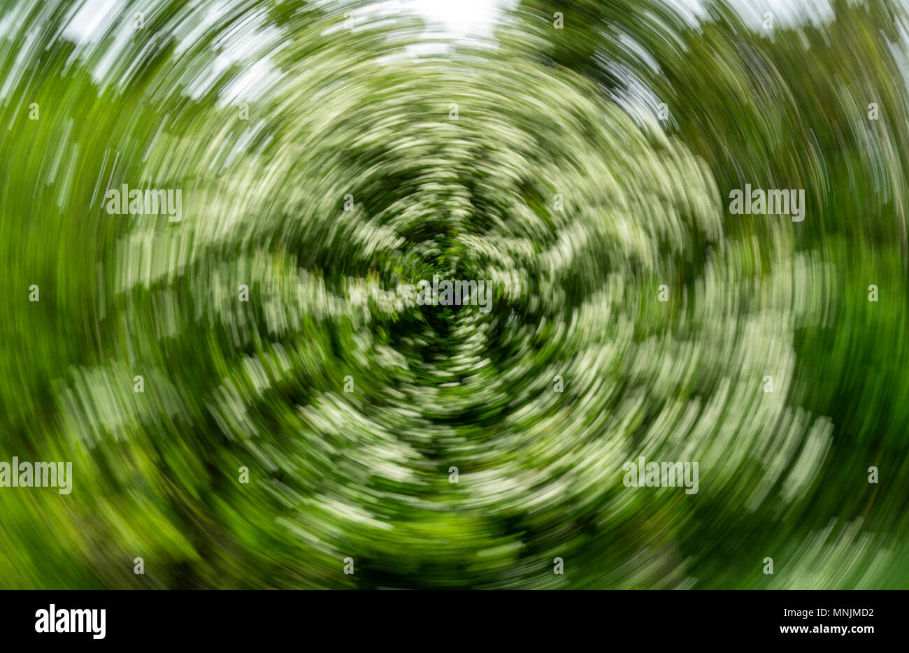 Abstract Spiral Effect Background - Hawthorn Tree - Stock Image
