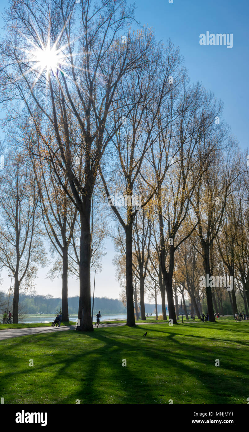 Tall trees on a sunny day with rays of sun shining through - Stock Image